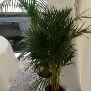 Mietpflanzen